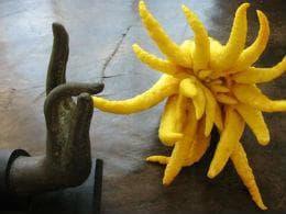 плод ръка на Буда в храм