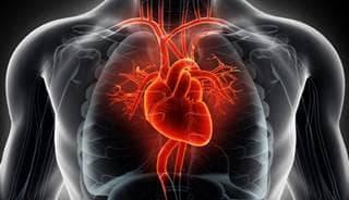 сърце и главни кръвоносни съдове