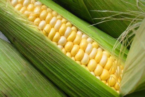 царевица