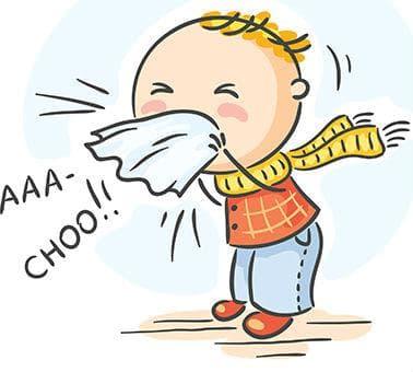 Черният бъз често се прилага при настинка, грип, бронхит и синузит