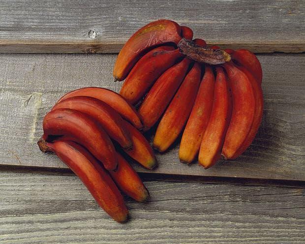 сорт червени банани