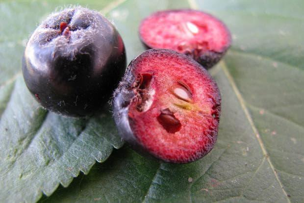 плодове на арония разрязани