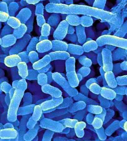 Нормална микрофлора на дебело черво