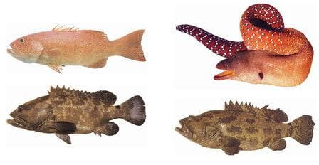 Коралови риби, потенциални носители на сигуатоксини