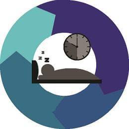 фази на съня