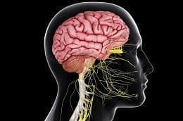 централна нервна система