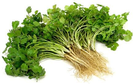 кориандър листа и корени