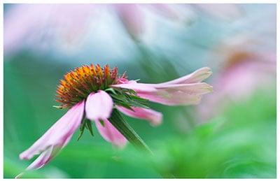 Цветита Хербал