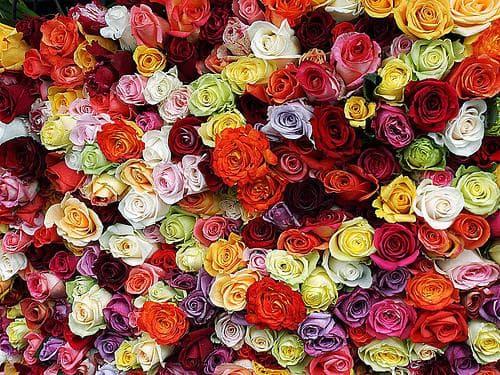 различни цветове роза