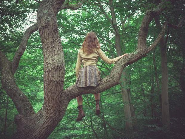 Катерене по дърво
