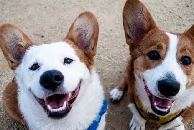 усмихват ли се кучетата