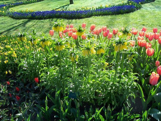 флорална декорация с ходжово лале