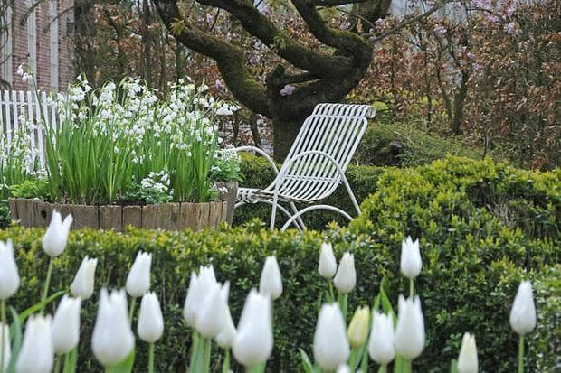флорална декорация с лятно блатно кокиче