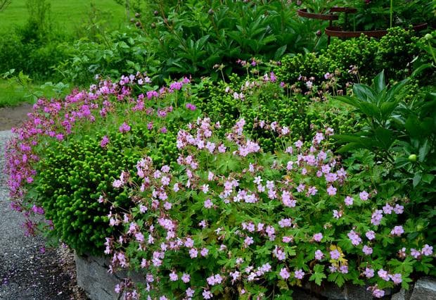 флорална декорация с обикновен здравец