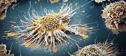 дендритна клетка