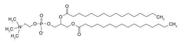 дипалмитоилфосфатидилхолин
