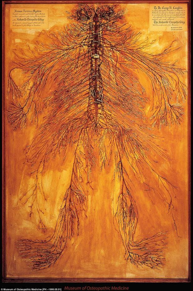 Дисекция на нервна система