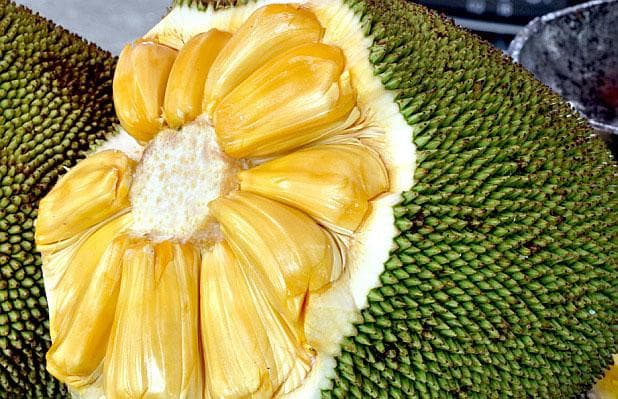 плод на джакфрут
