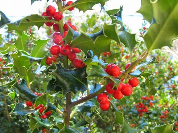 плодове на джел