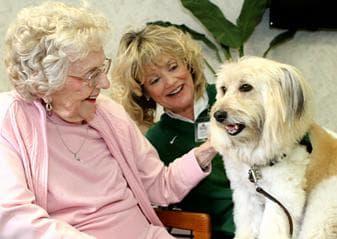 терапия с животни при болест на Паркинсон