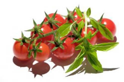 домати срещу рак на тестисите