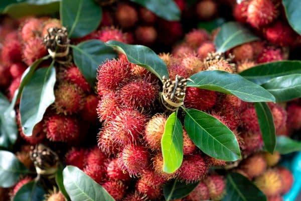 плодове рамбутан
