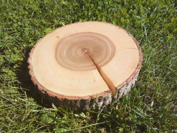 дървесина на ясен
