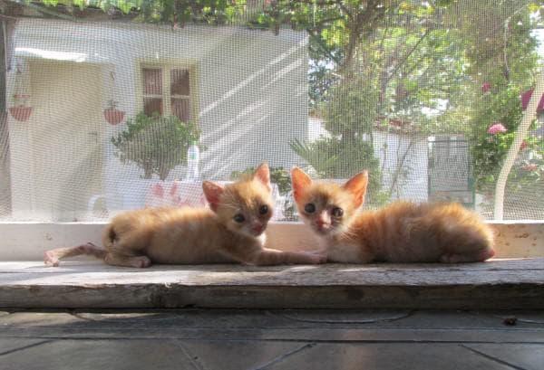коте, котета, котки