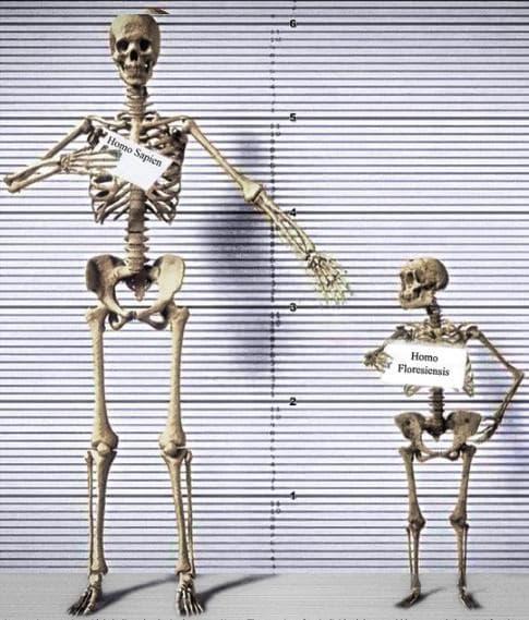 Сравнение между скелетите на съвременен човек и Флоренски човек