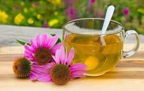Ехинацея  чай и цвят