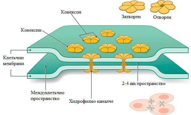 електричен синапс