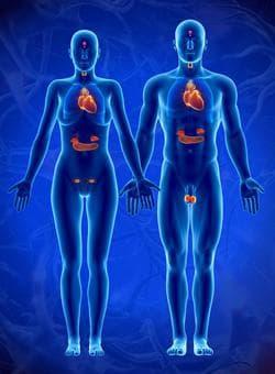 Ендокринни жлези