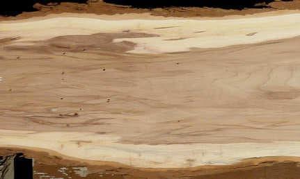 дървесина на английски бряст