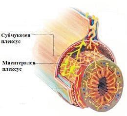 ентерална нервна система