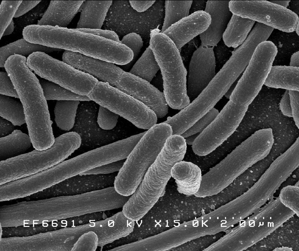 Грам-отрицателни бактерии