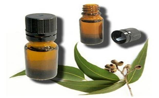 Евкалиптово масло