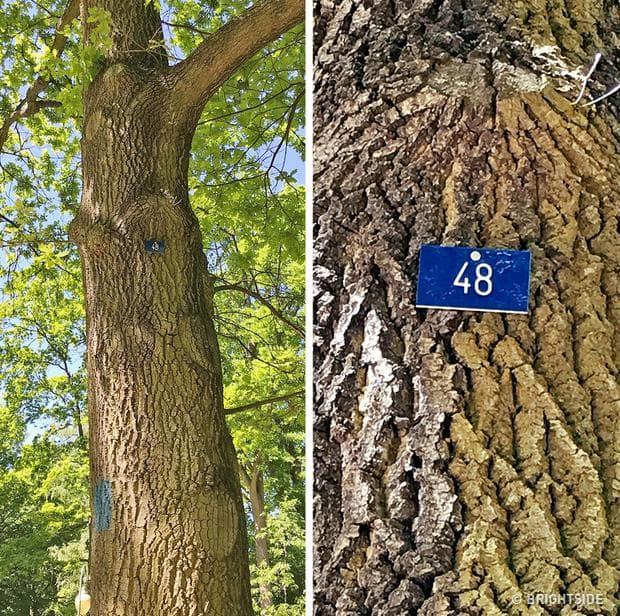 дървета в Германия