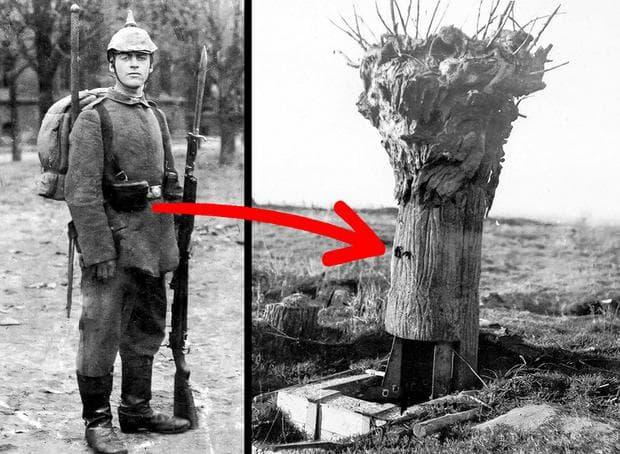 кухи дървета