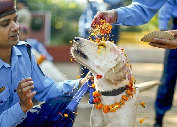 фестивал на кучетата