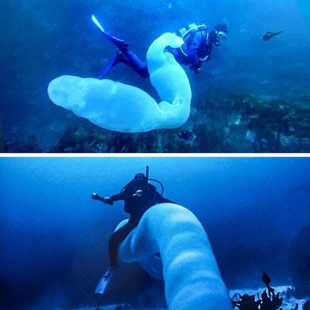 морско създание
