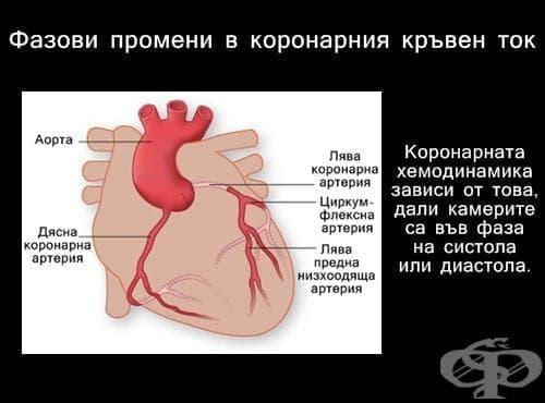 Фазови промени в коронарния кръвен ток