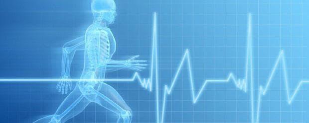 промени в сърдечно-съдовата система по време на физическа работа