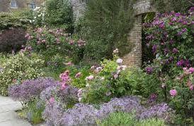 цветна градина с декоративен лук