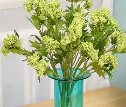 цветя на лодхра