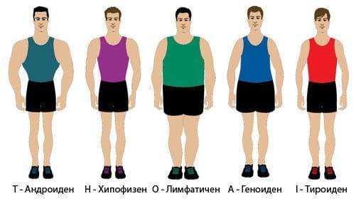 Соматотип мъже