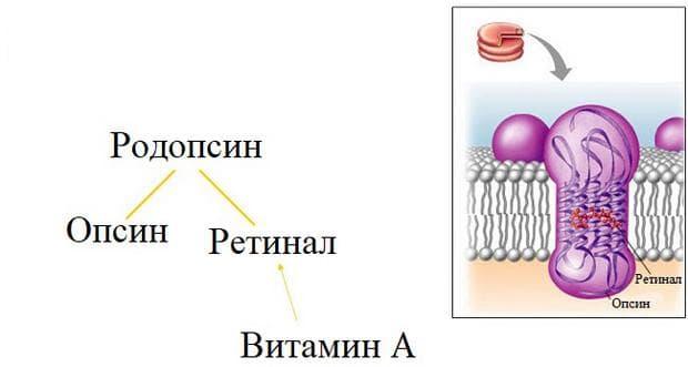 фотохимичен механизъм