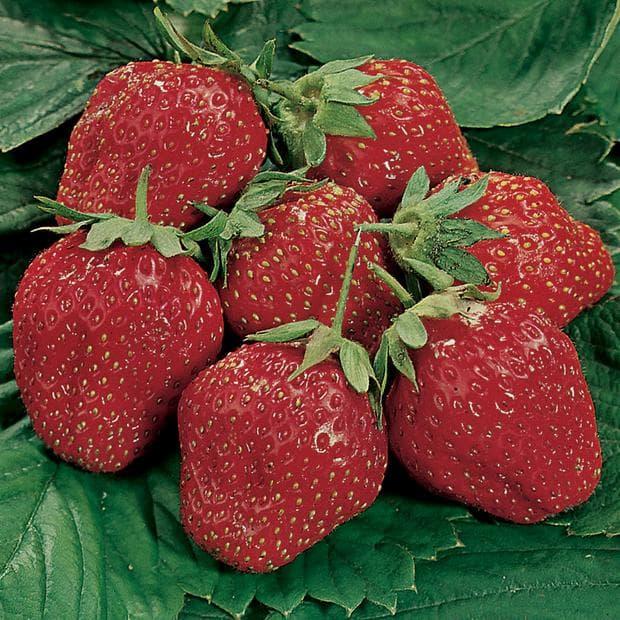ягоди за дневна доза витамин C за дете