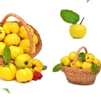 плодове дюля