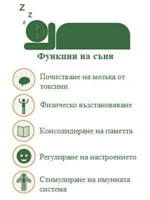 функции на съня