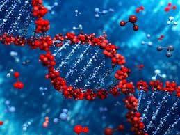 Генетични фактори
